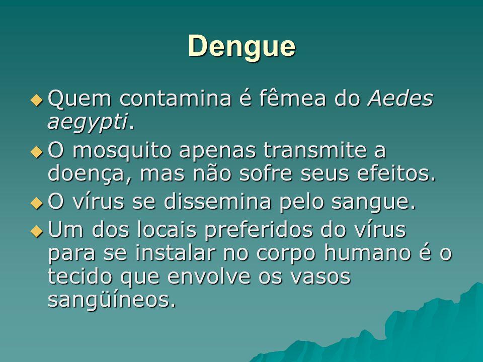 Dengue Quem contamina é fêmea do Aedes aegypti.
