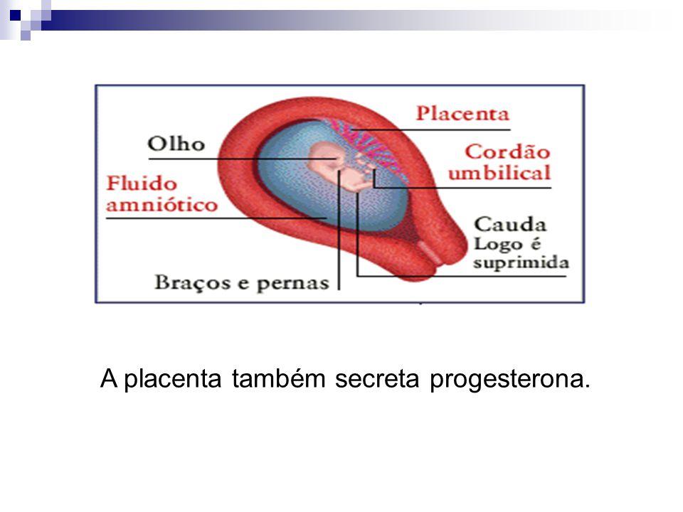 A placenta também secreta progesterona.