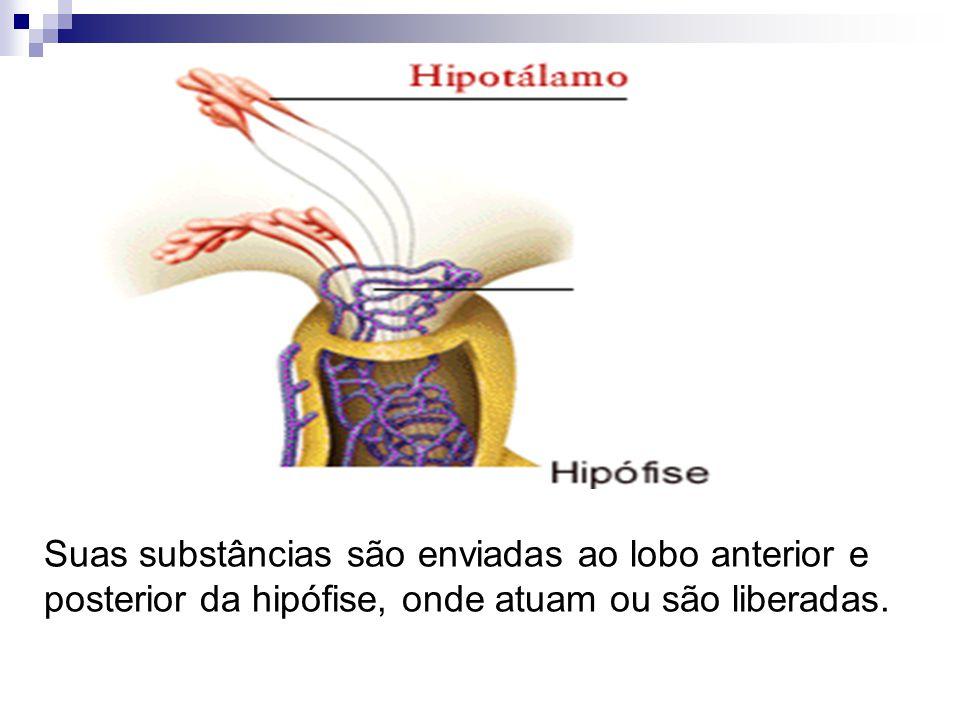 Suas substâncias são enviadas ao lobo anterior e posterior da hipófise, onde atuam ou são liberadas.