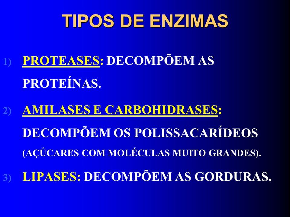 TIPOS DE ENZIMAS PROTEASES: DECOMPÕEM AS PROTEÍNAS.