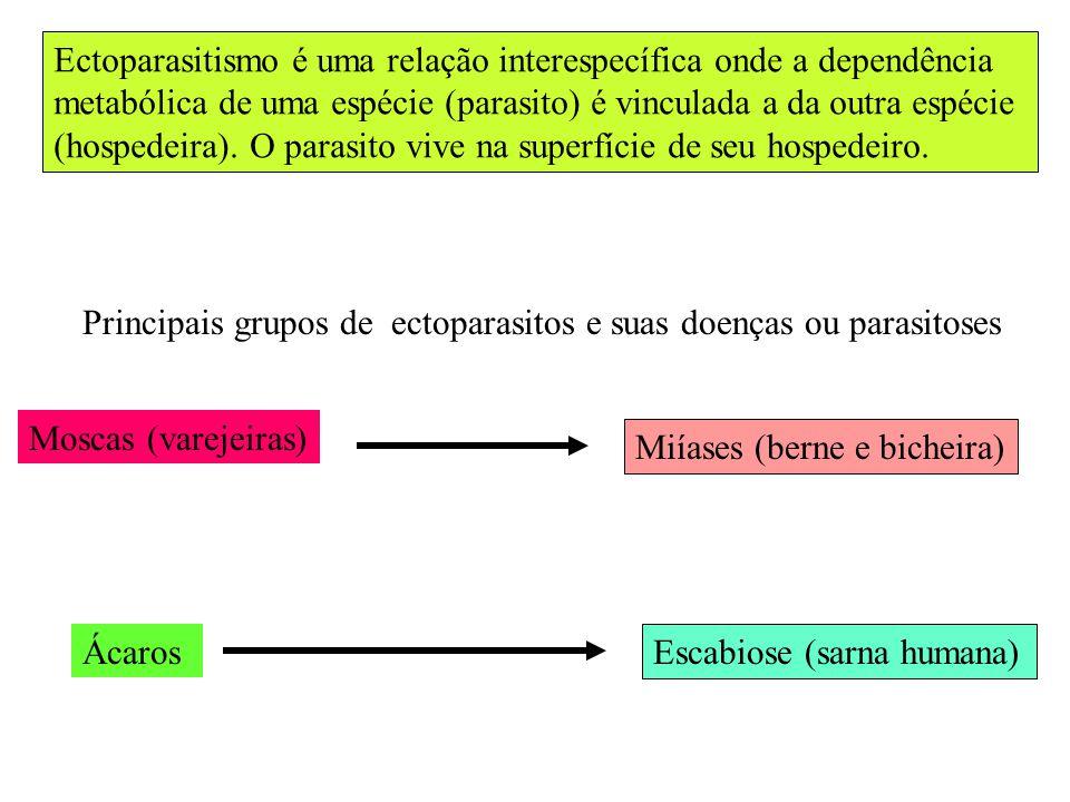 Ectoparasitismo é uma relação interespecífica onde a dependência
