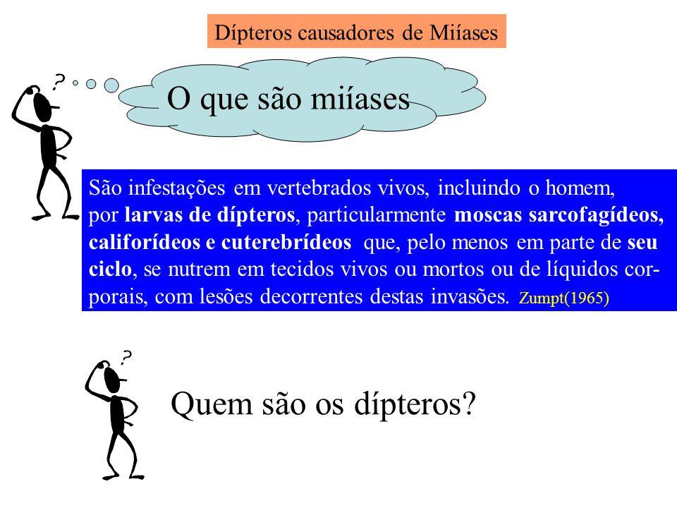 O que são miíases Quem são os dípteros Dípteros causadores de Miíases
