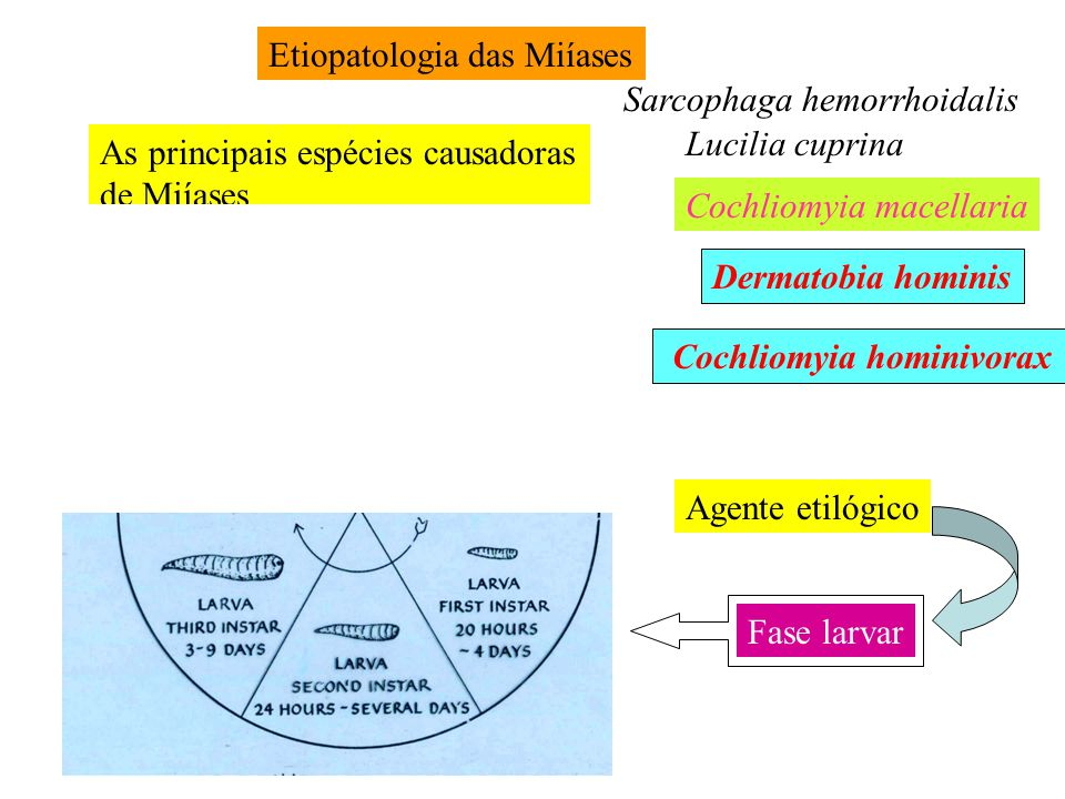 Etiopatologia das Miíases