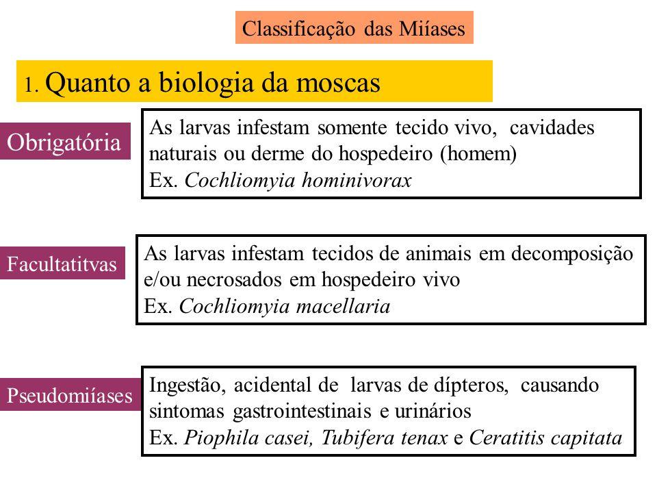 Obrigatória Classificação das Miíases 1. Quanto a biologia da moscas