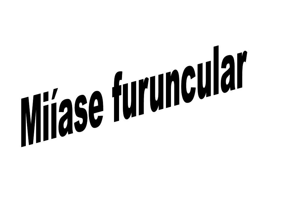 Miíase furuncular