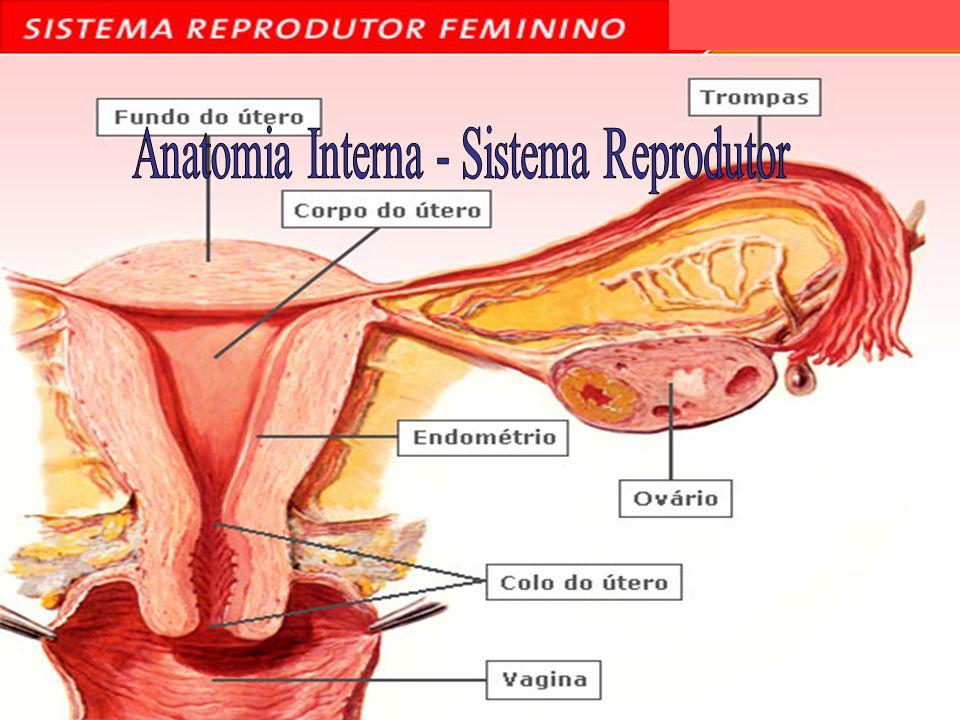 Anatomia Interna - Sistema Reprodutor