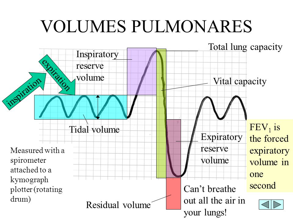 VOLUMES PULMONARES Total lung capacity Inspiratory reserve volume