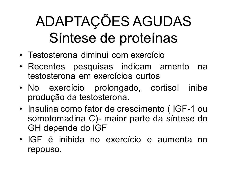 ADAPTAÇÕES AGUDAS Síntese de proteínas
