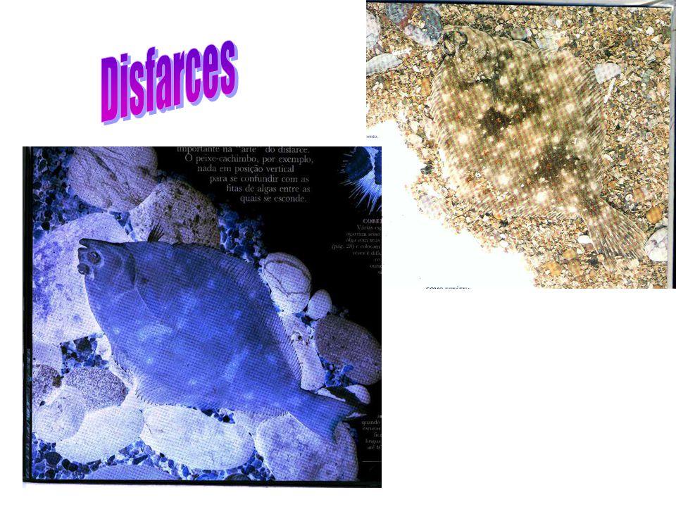 Disfarces