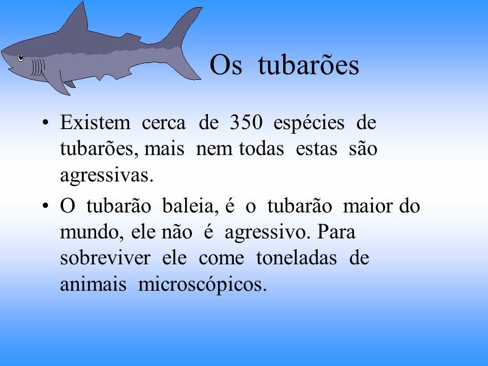 Os tubarões Existem cerca de 350 espécies de tubarões, mais nem todas estas são agressivas.