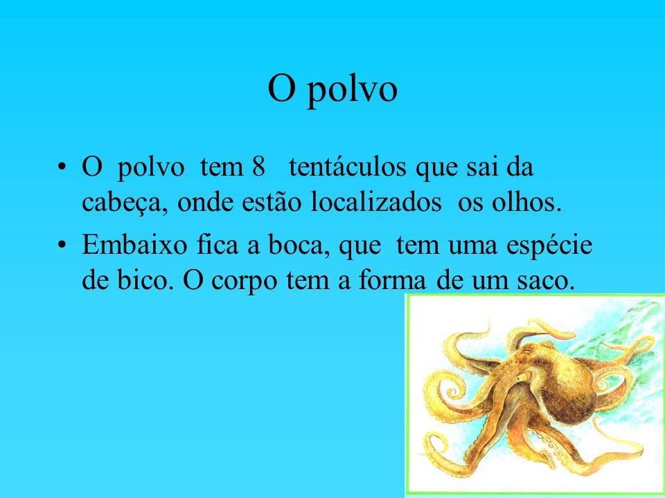 O polvo O polvo tem 8 tentáculos que sai da cabeça, onde estão localizados os olhos.