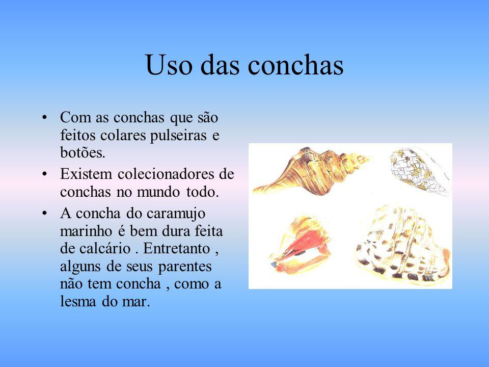 Uso das conchas Com as conchas que são feitos colares pulseiras e botões. Existem colecionadores de conchas no mundo todo.