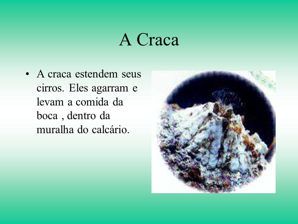 A Craca A craca estendem seus cirros.