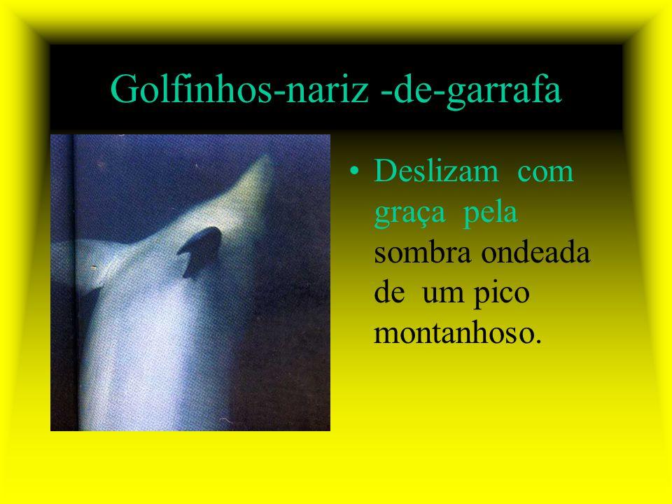 Golfinhos-nariz -de-garrafa