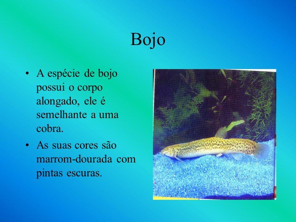 Bojo A espécie de bojo possui o corpo alongado, ele é semelhante a uma cobra.