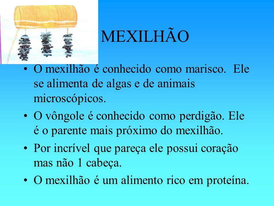 O MEXILHÃO O mexilhão é conhecido como marisco. Ele se alimenta de algas e de animais microscópicos.