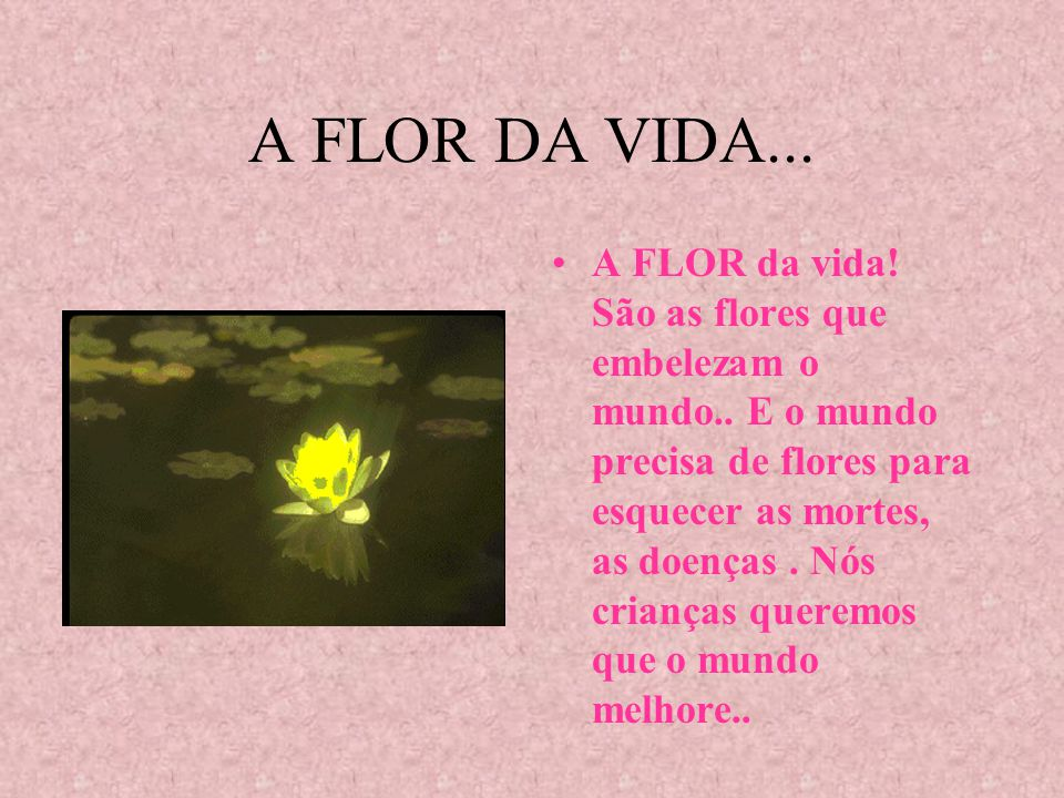 A FLOR DA VIDA...