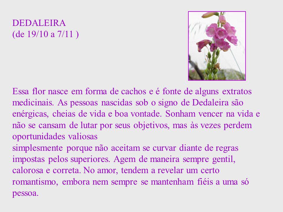 DEDALEIRA (de 19/10 a 7/11 )