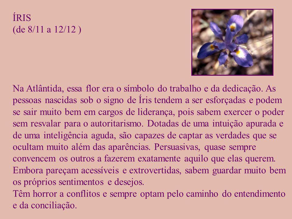 ÍRIS (de 8/11 a 12/12 )