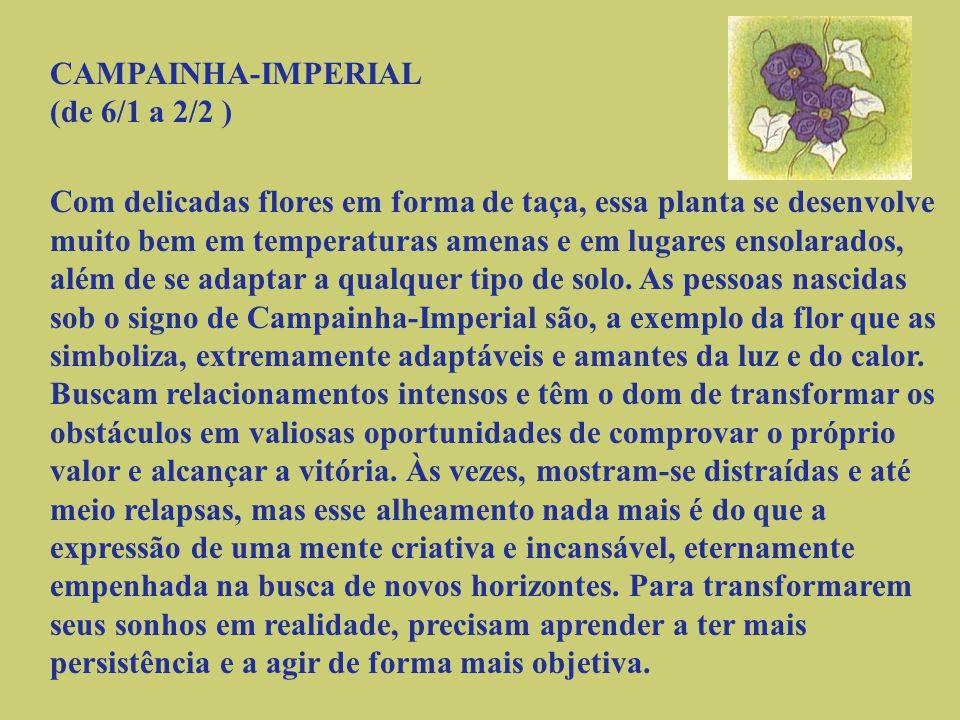 CAMPAINHA-IMPERIAL (de 6/1 a 2/2 )