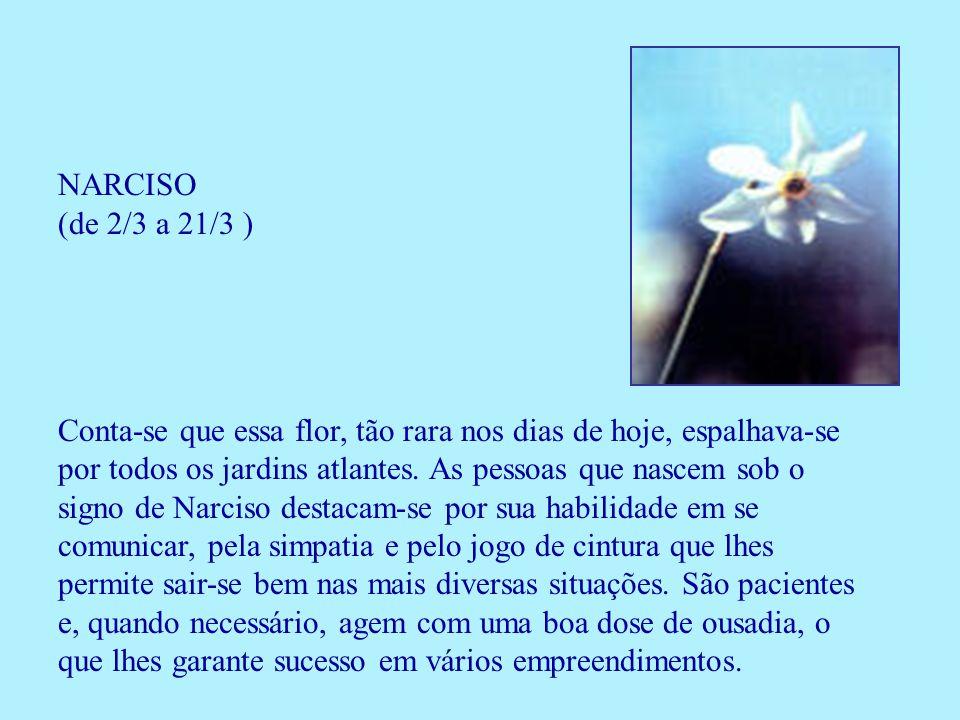 NARCISO (de 2/3 a 21/3 )