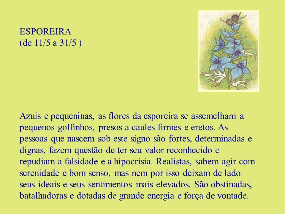 ESPOREIRA (de 11/5 a 31/5 )