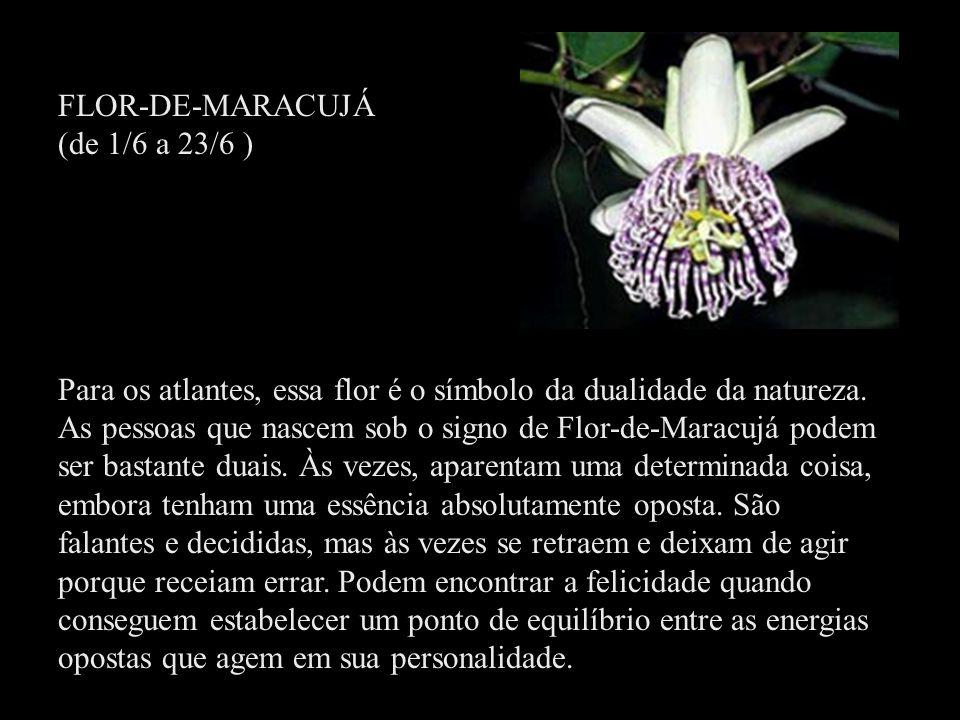 FLOR-DE-MARACUJÁ (de 1/6 a 23/6 )