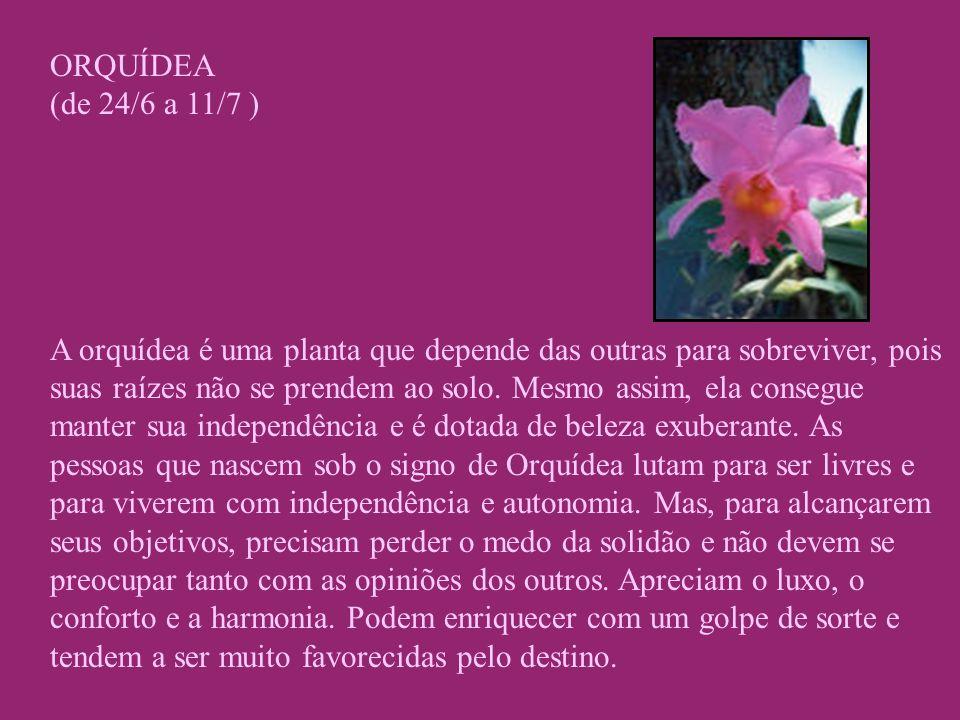 ORQUÍDEA (de 24/6 a 11/7 )