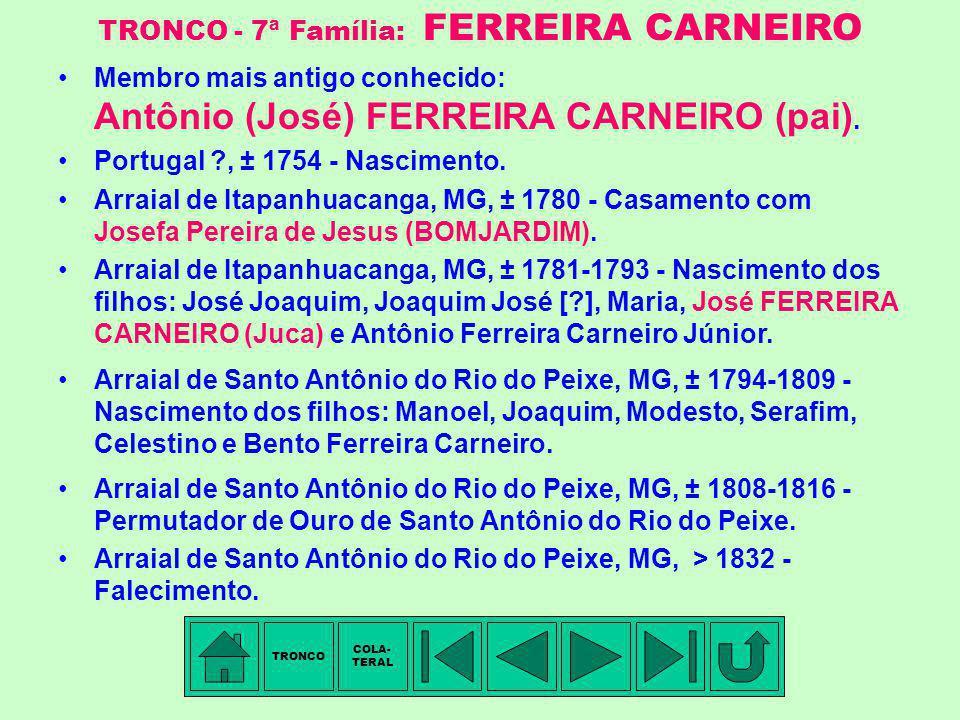TRONCO - 7ª Família: FERREIRA CARNEIRO