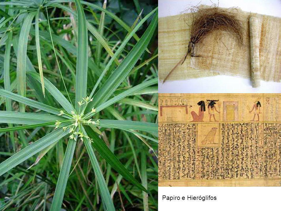 Papiro e Hieróglifos