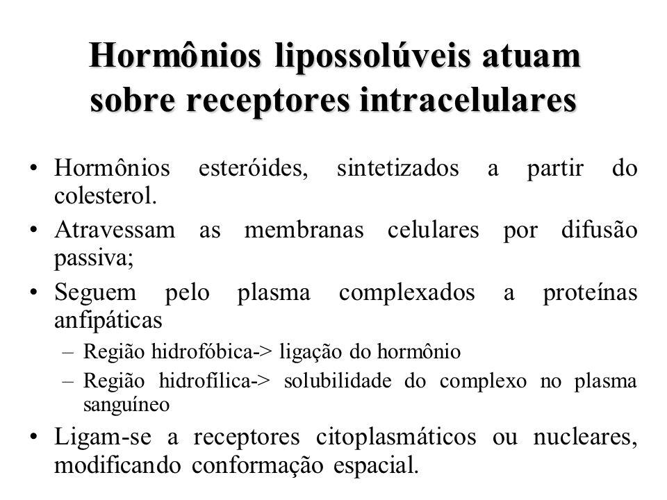 Hormônios lipossolúveis atuam sobre receptores intracelulares