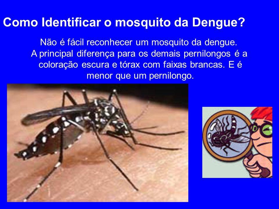 Como Identificar o mosquito da Dengue