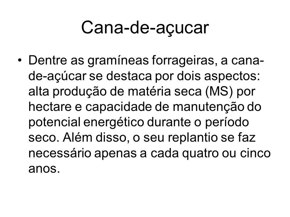 Cana-de-açucar