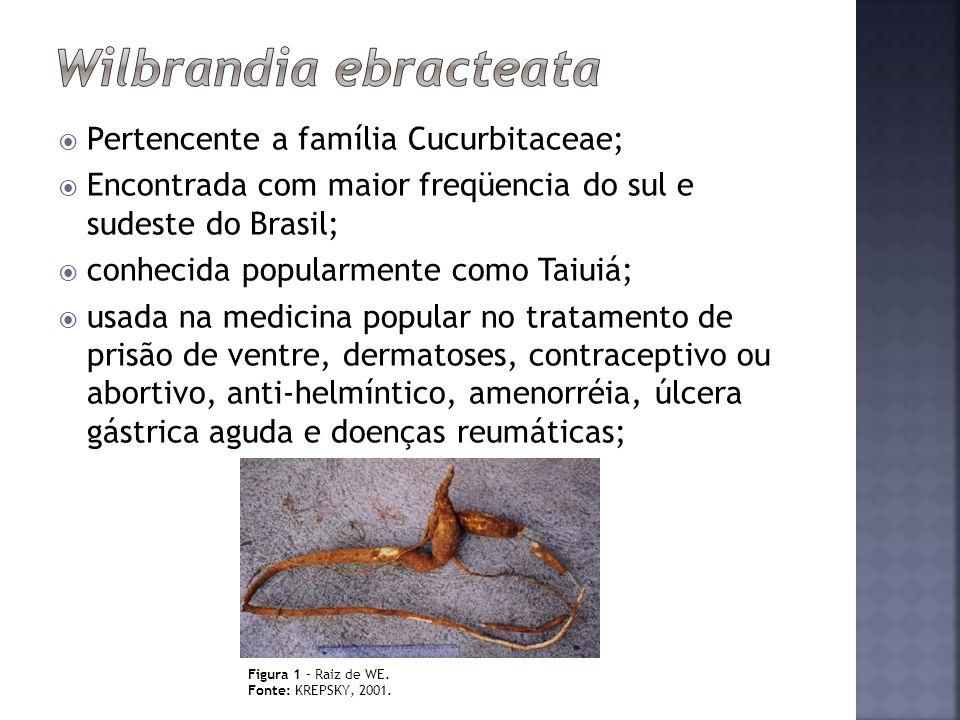 Wilbrandia ebracteata