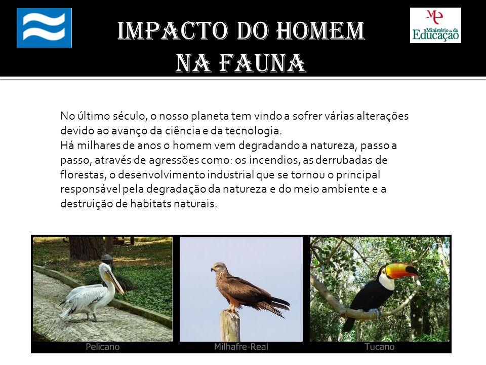 Impacto do homem na fauna