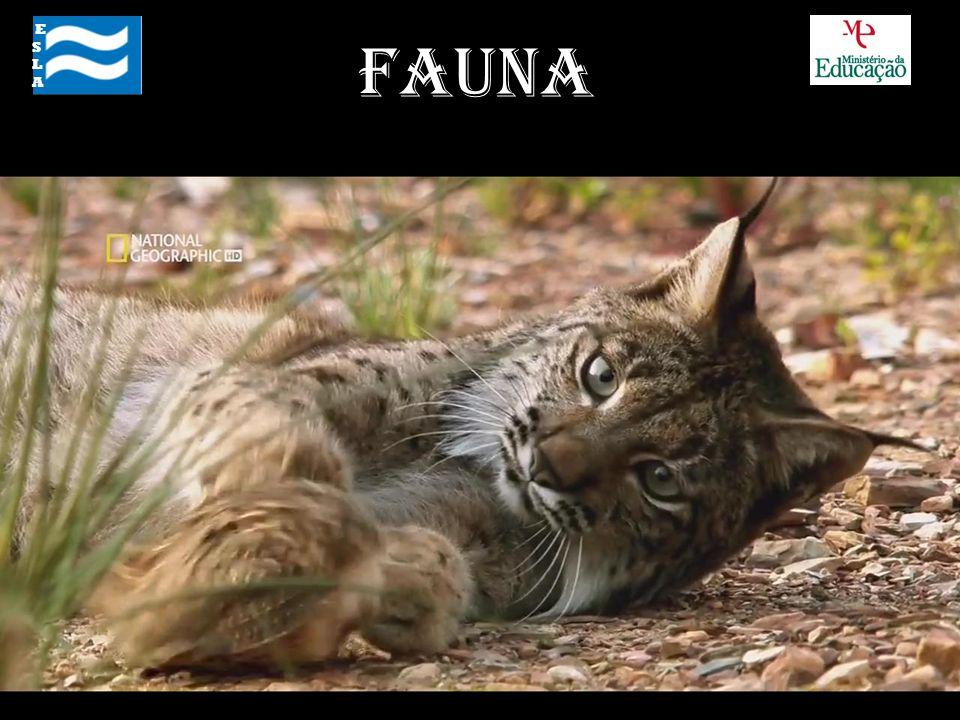 E S L A Fauna