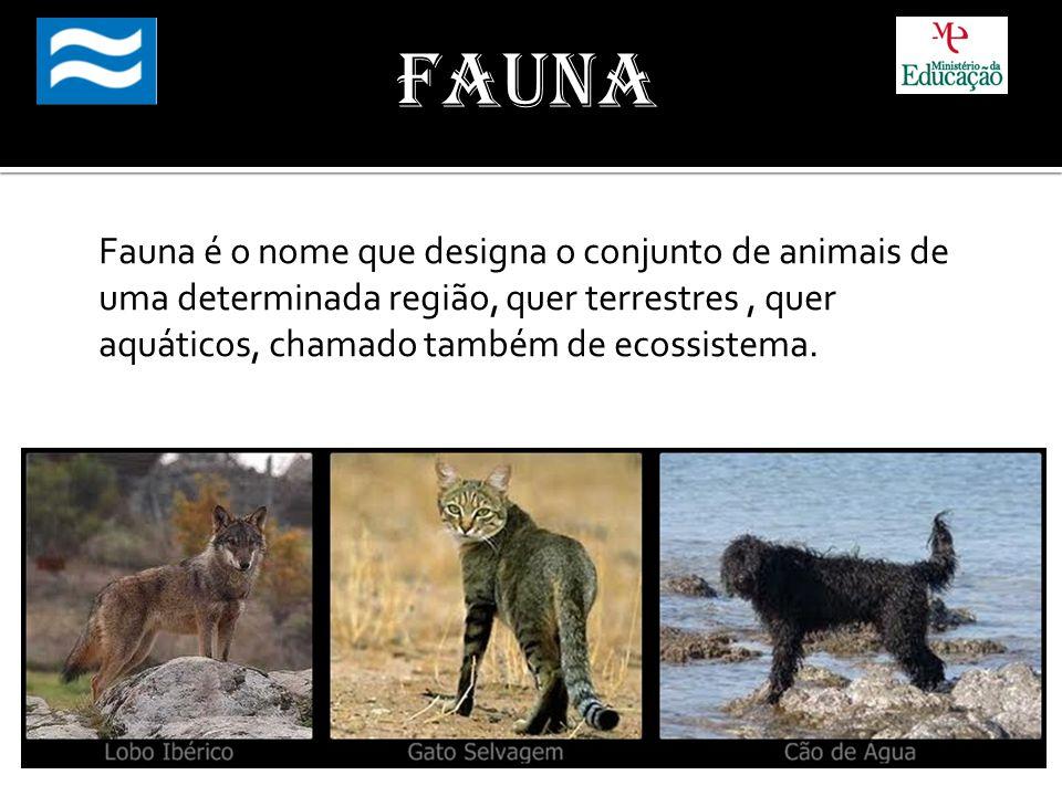 Fauna Fauna é o nome que designa o conjunto de animais de uma determinada região, quer terrestres , quer aquáticos, chamado também de ecossistema.