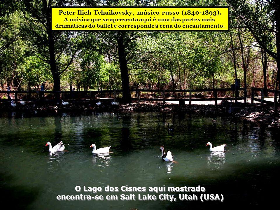 O Lago dos Cisnes aqui mostrado