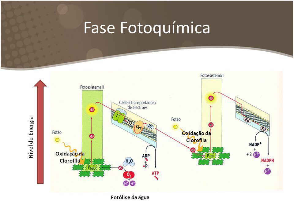 Fase Fotoquímica Nível de Energia Oxidação da Clorofila Oxidação da