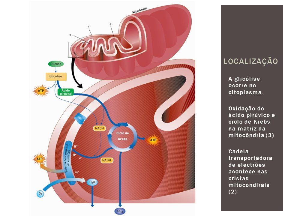 Localização A glicólise ocorre no citoplasma.