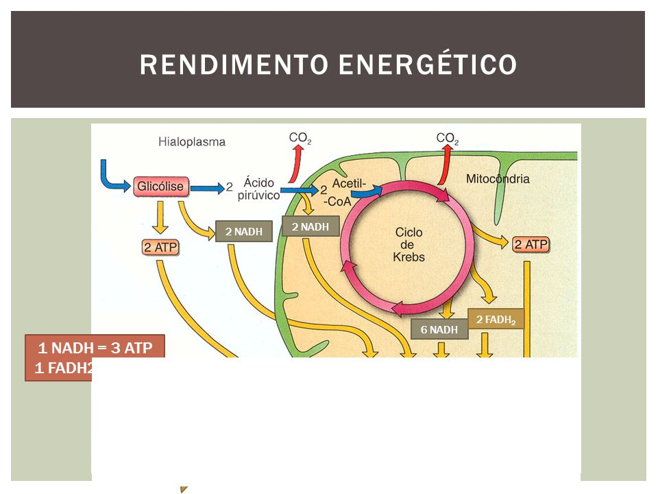 Rendimento Energético