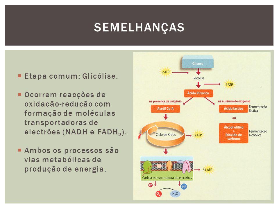 Semelhanças Etapa comum: Glicólise.