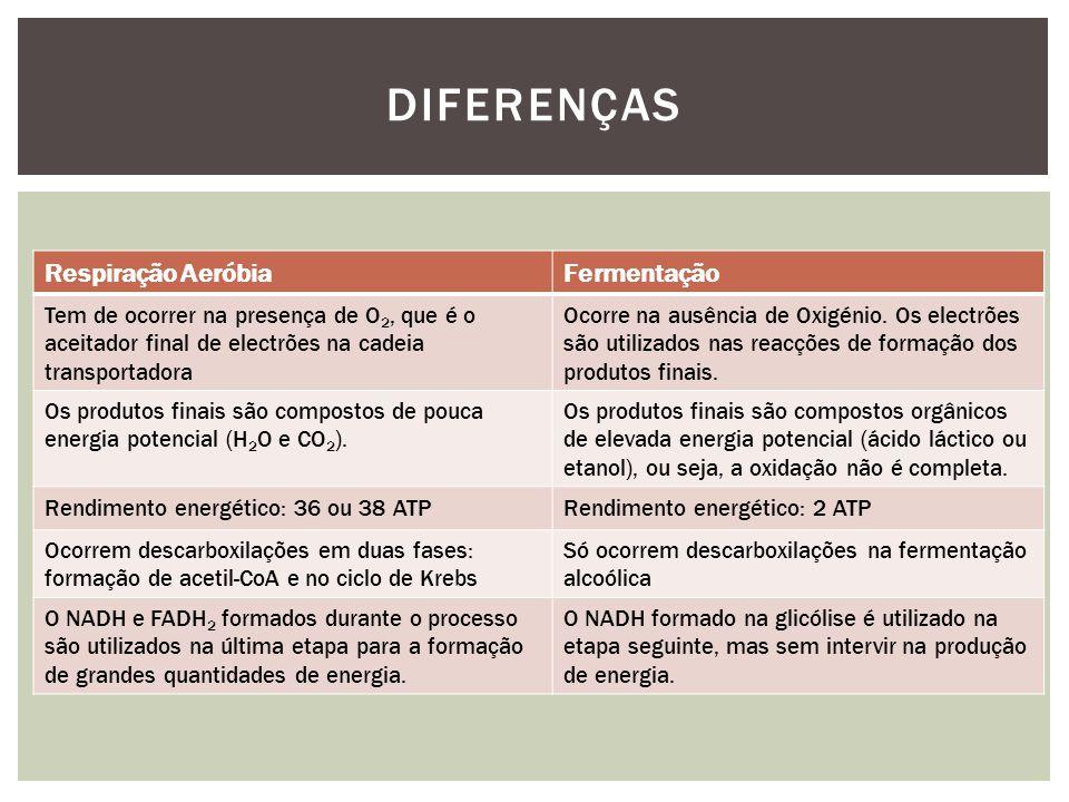 Diferenças Respiração Aeróbia Fermentação