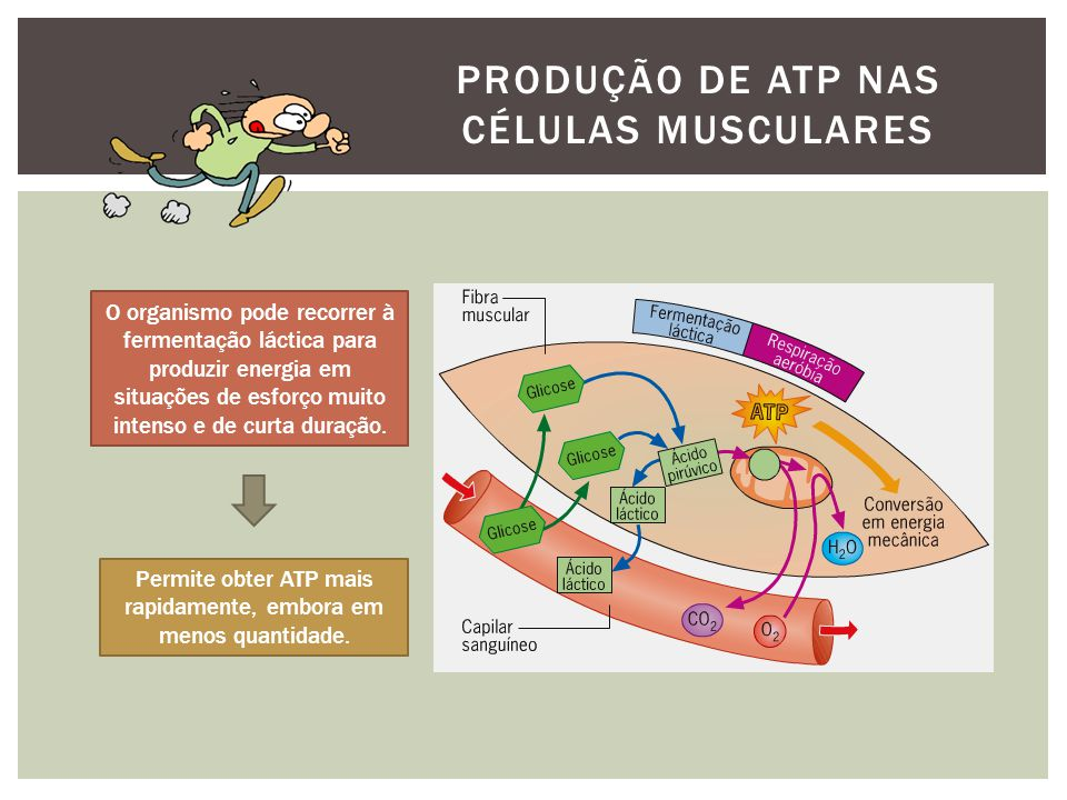 Produção de ATP nas células musculares