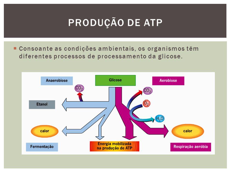 Produção de ATP Consoante as condições ambientais, os organismos têm diferentes processos de processamento da glicose.