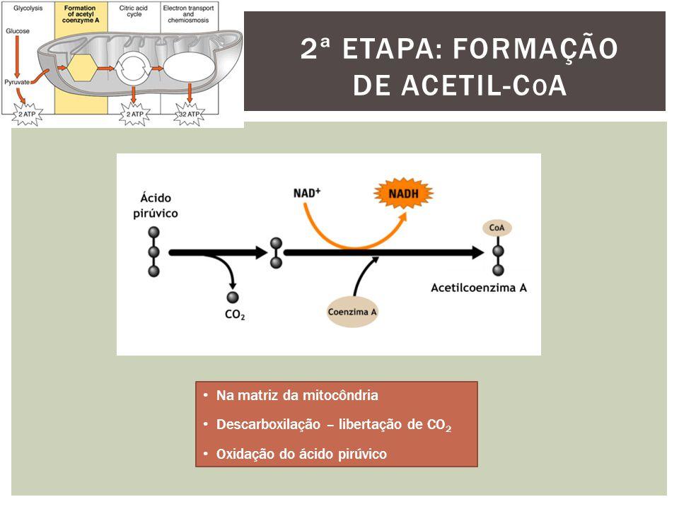 2ª etapa: Formação de acetil-coa
