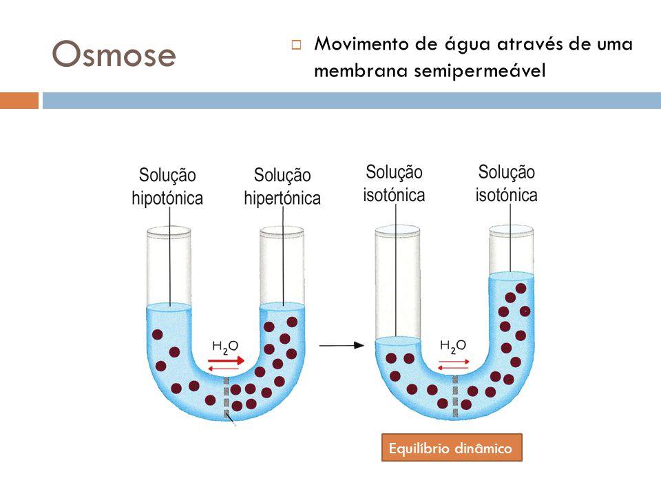 Osmose Movimento de água através de uma membrana semipermeável