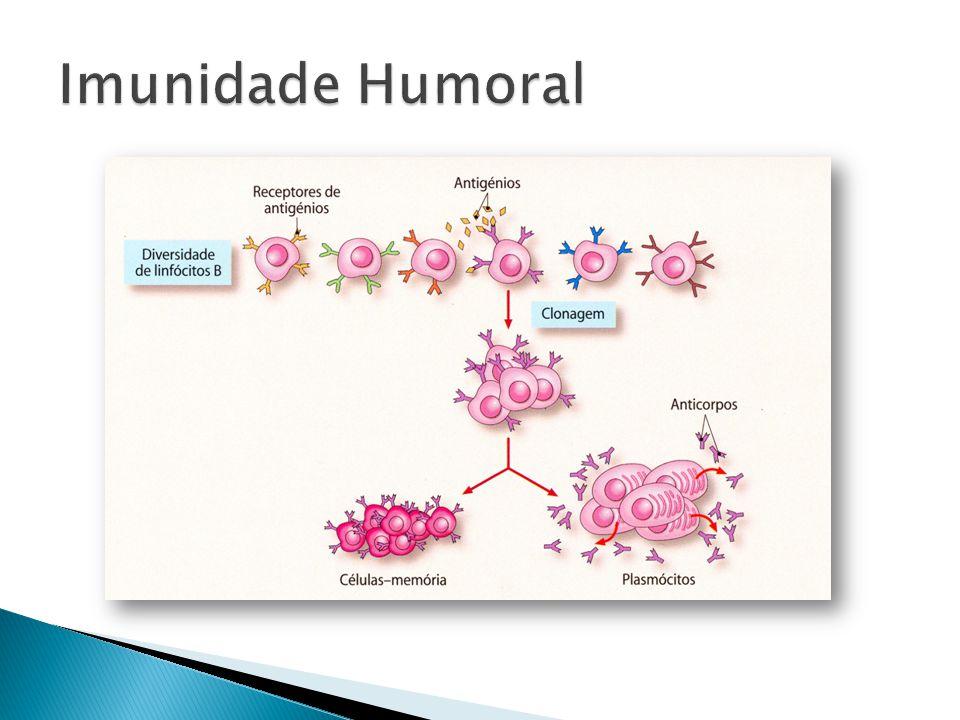 Imunidade Humoral
