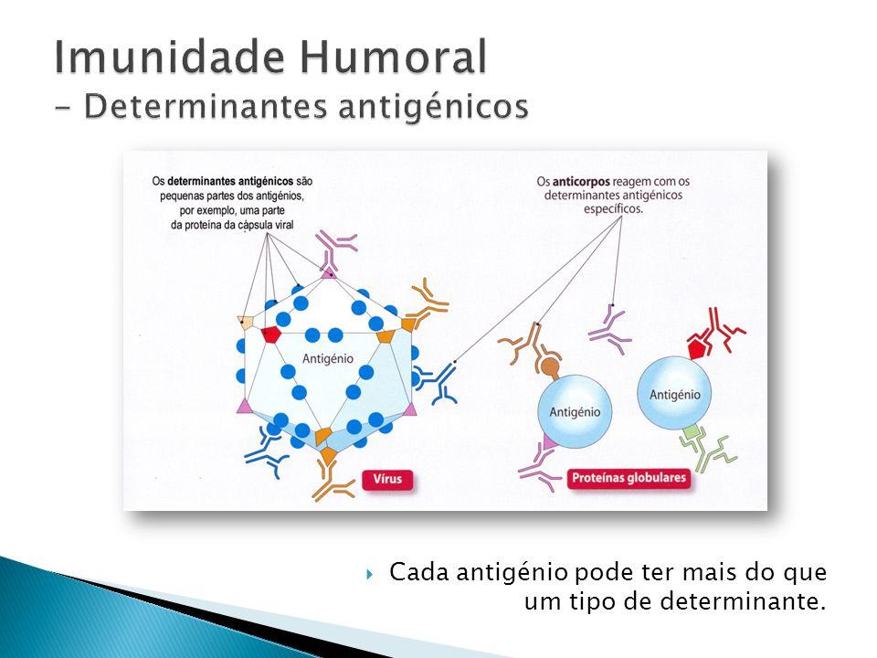 Imunidade Humoral - Determinantes antigénicos