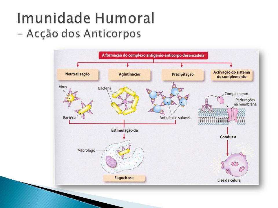 Imunidade Humoral - Acção dos Anticorpos